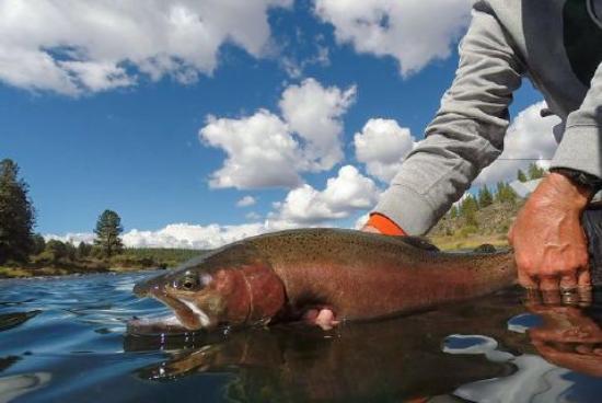 Chiloquin, OR: Williamson River Troutat your doorstep