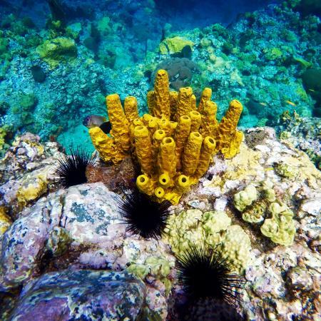 Розо, Доминика: Coral