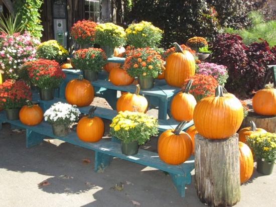 Gilford, NH: Pumpkins and mums in September