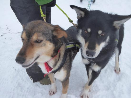 Risoyhamn, Norwegia: some of the dogs