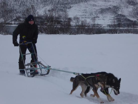 Risoyhamn, Norwegia: drive your own sledge