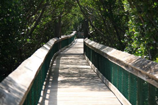 boardwalk picture of long key state park florida keys tripadvisor rh tripadvisor co uk