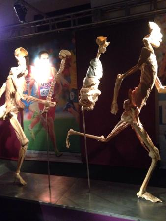 Exhibition Real Bodies