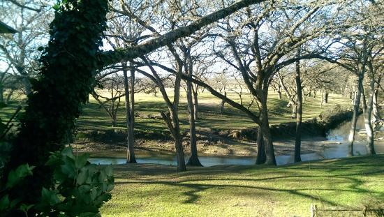 Meyer Bed and Breakfast on Cypress Creek: Deer feeder across the creek brings daily entertainment