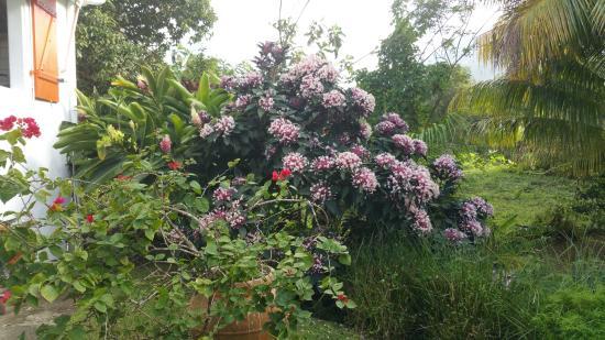 Le Morne-Rouge, Martinica: le jardin