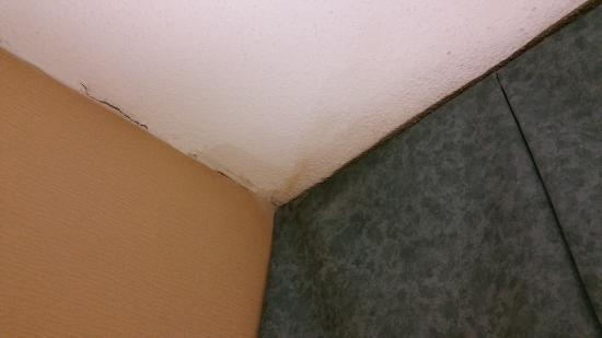 Best Western Falls Church - Arlington Area: Water stains with a side of mold, please.