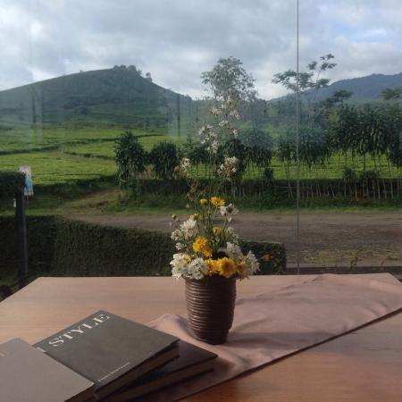Tea Garden Resort Bandung : Beautiful View