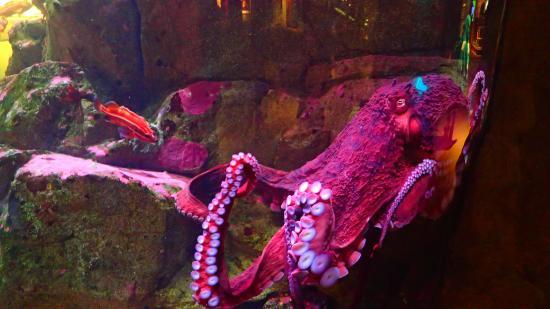 Octopus Picture Of Seattle Aquarium Seattle Tripadvisor