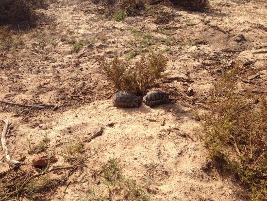 Yzerfontein, Republika Południowej Afryki: photo8.jpg