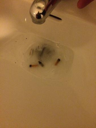 Merthyr Tydfil, UK: While brushing my teeth these appeared in the sink.