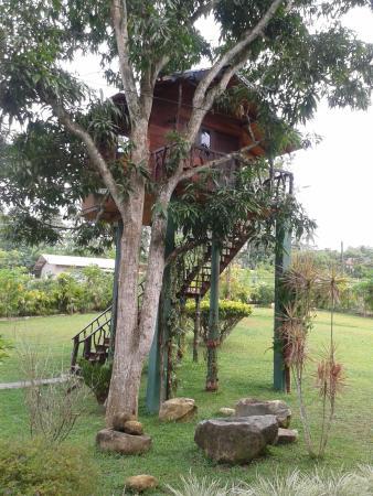 Gonagala, Sri Lanka: Das Baumhaus.