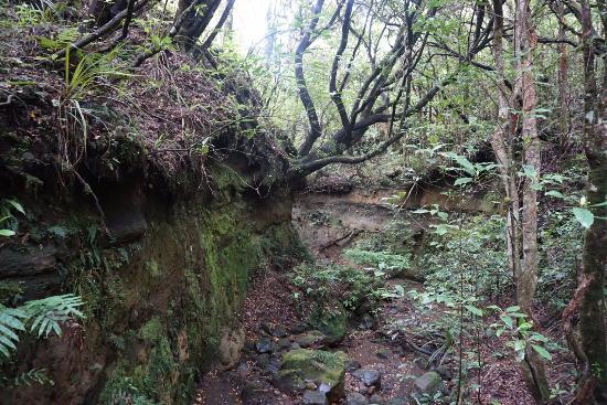 Whakapapa, نيوزيلندا: Back in the forest