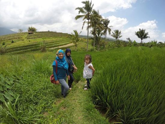 Jatiluwih Green Land: pengalaman seru