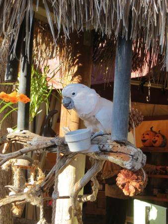 Эскондидо, Калифорния: bird watching us