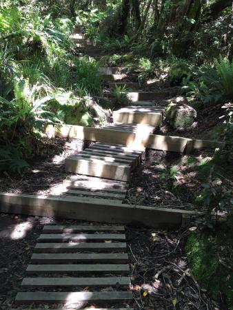 Stratford, نيوزيلندا: Walkway at start
