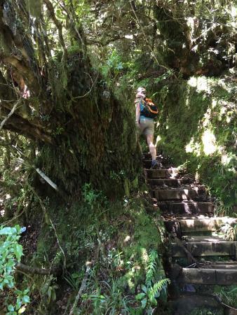 Stratford, نيوزيلندا: Stairs up