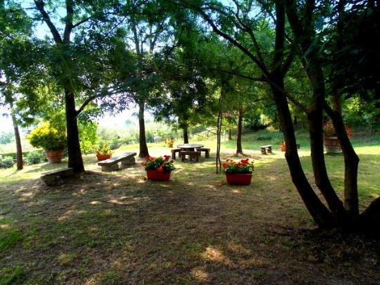 Guardistallo, Italia: full relax in the shadow ...