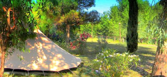 Guardistallo, Italia: we like tents ! tents are heartlily welcome !