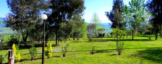 Guardistallo, Italia: our campsite in the wood ...