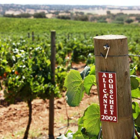 Redondo, Portugal: Beside winemaking we care also with the environment. This is our way to thank mother nature.