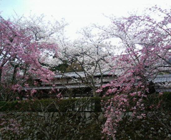 Shojiji Temple : 本堂下側から