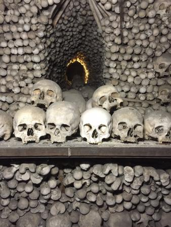 Brno, República Checa: Just some of the skulls that you'll see on display