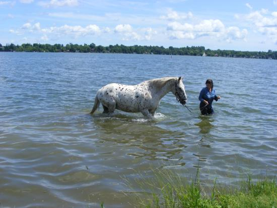 Kawartha Lakes, Kanada: Swimming with Horses