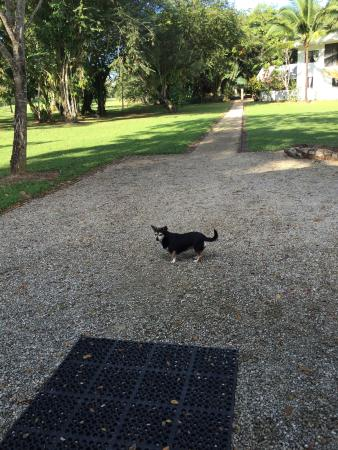 Roaring River Golf Course Accomodation: owner's pet