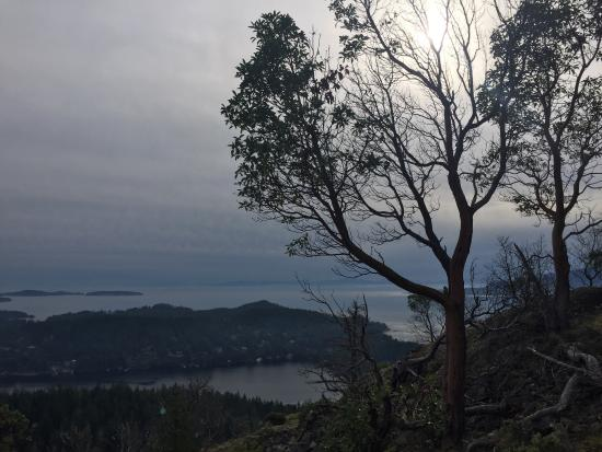 Pender Hill Park : View from the top