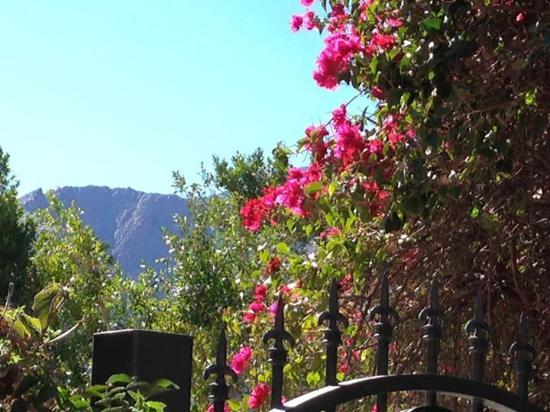 BEST WESTERN PLUS Las Brisas Hotel: View from the pool