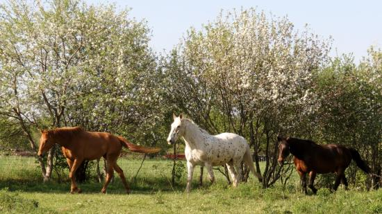 Kawartha Lakes, Canadá: An Orchard with Friendly Horses