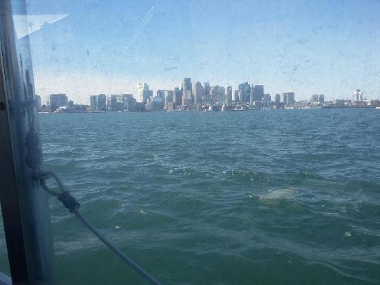Hyatt Regency Boston Harbor : Water Taxi into city Center
