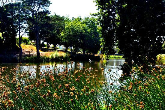 Cobden Lake