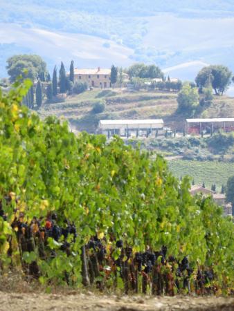 Montalcino, Italien: Lovely vistas all over the vineyard.