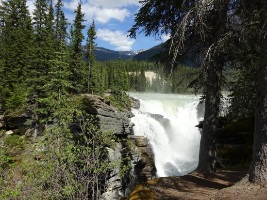 A view of the Athabasca Falls