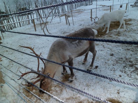 Snowhotel Kirkenes: Snow Hotel Grounds