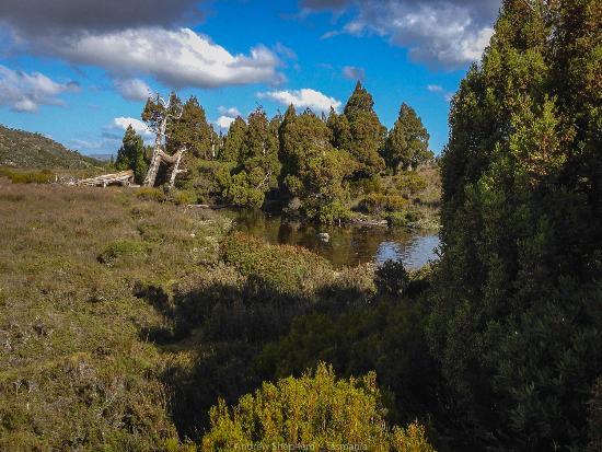 Ταζμανία, Αυστραλία: Pine Lake, Tasmania featuring ancient Pencil Pines