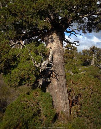 Ταζμανία, Αυστραλία: Pine Lake, Tasmania featuring alpine terrain