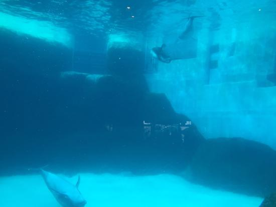 ... jpg - Picture of Port of Nagoya Public Aquarium, Nagoya - TripAdvisor