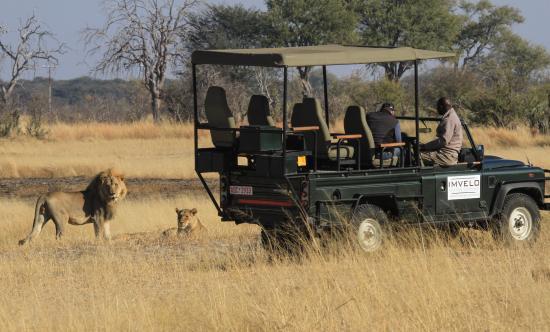Hwange, Zimbabwe: Lion on a gamedrive