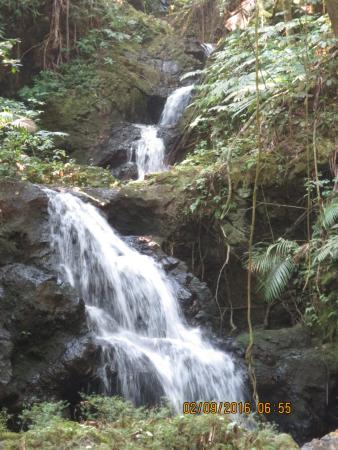 Papaikou, HI: Onomea Falls