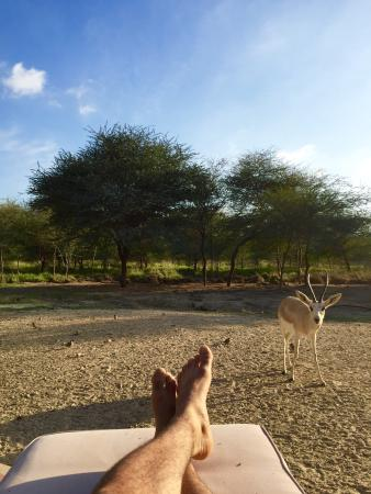 Sir Bani Yas Island, De Forenede Arabiske Emirater: View from the room's terrace