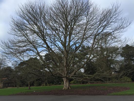 Kew, UK: photo8.jpg