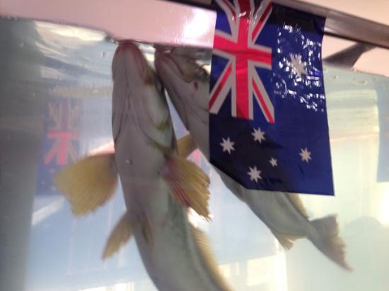สแตนลีย์, ออสเตรเลีย: I enjoyed watching the fish while waiting (a few minutes) for my takeaway battered scallops.