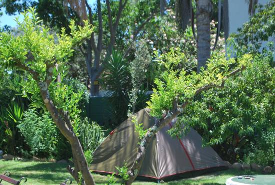 Stumble Inn Backpackers Lodge Stellenbosch: nice garden