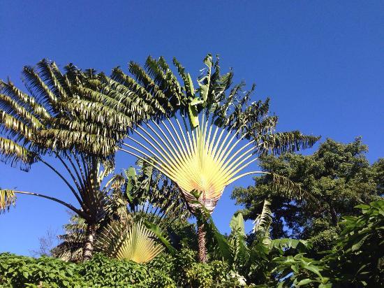 Deshaies, Guadalupe: le plus beau de tous !!