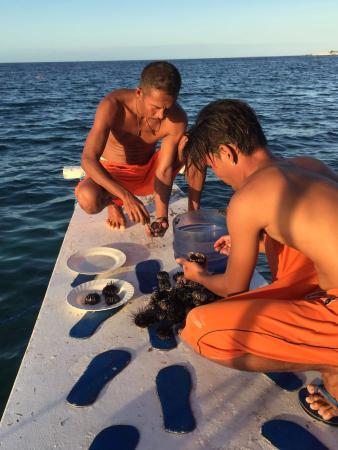 Lapu Lapu, Filippinerne: Cleaning our catch of sea urchin