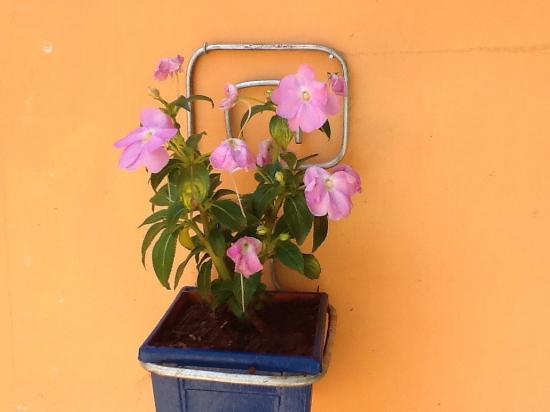 Pampa Churrascaria: photo0.jpg