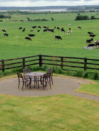 Bunratty Meadows Bed and Breakfast: photo1.jpg