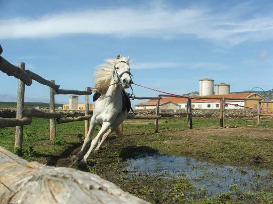 Asinara, Italia: Cavalcando